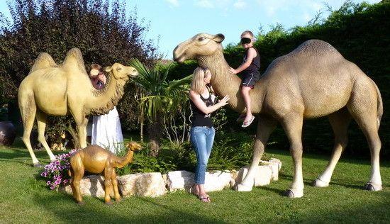 location dun dromadaire et dun chameau pour mariage - Location De Chameau Pour Mariage